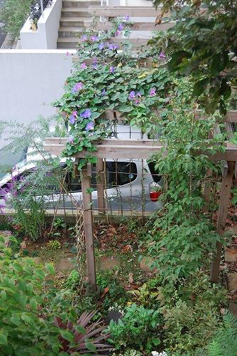 10月の庭…_c0124100_020555.jpg