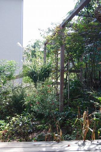 10月の庭…_c0124100_02238.jpg