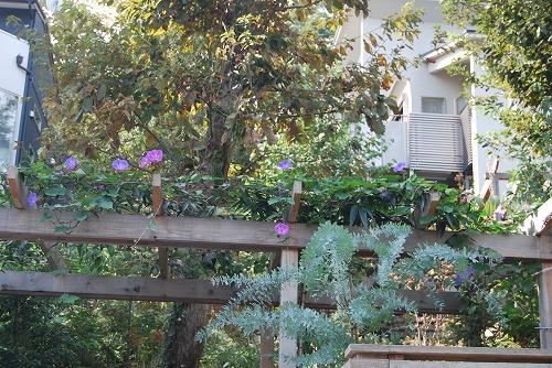 10月の庭…_c0124100_0385538.jpg