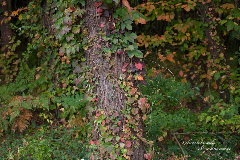 寒さと共に降りて来ました紅葉前線_c0137403_18511835.jpg