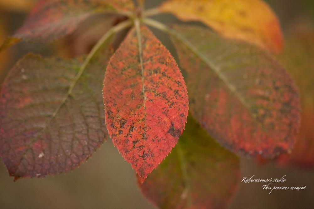 寒さと共に降りて来ました紅葉前線_c0137403_18524352.jpg