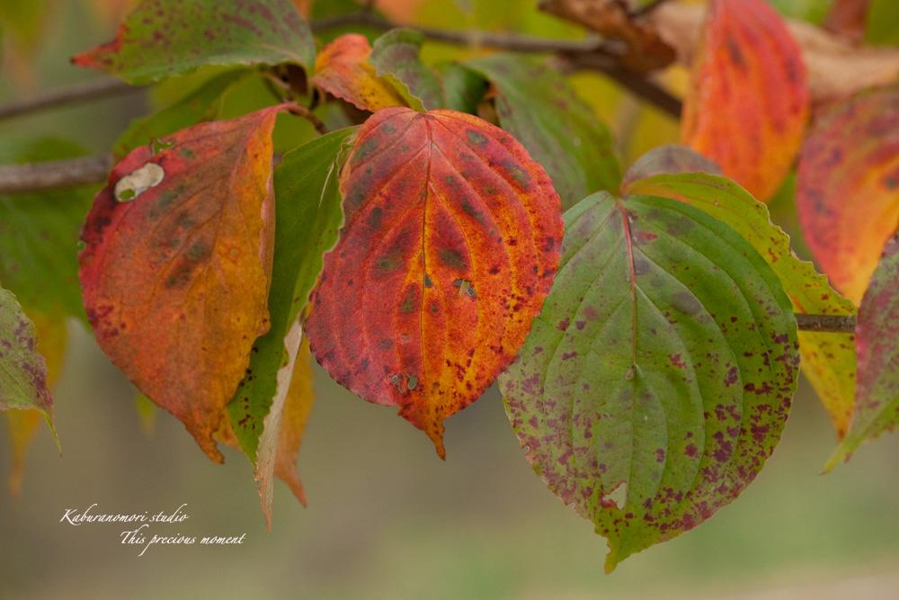 寒さと共に降りて来ました紅葉前線_c0137403_18555949.jpg
