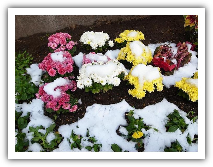 雪の下の花_f0033205_22182191.jpg