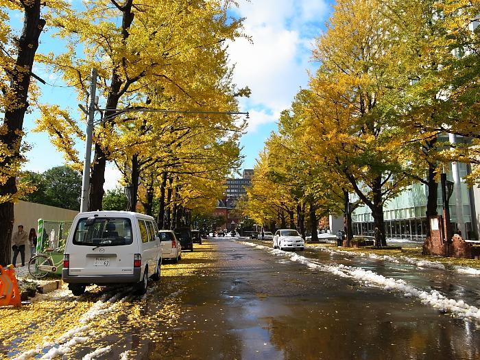 道庁前の銀杏並木_f0033205_22214579.jpg