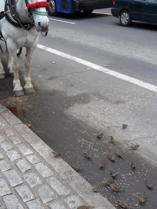 馬のエサをすかさずスズメが_d0151007_1524260.jpg