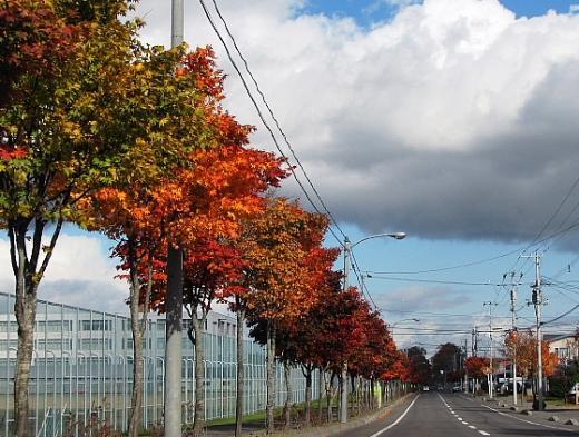 2010年10月27日(水):初冠雪!_e0062415_17114870.jpg