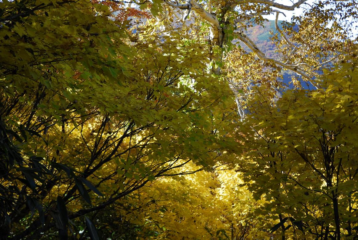 2010年10月 秋の深まり_c0219616_1546547.jpg