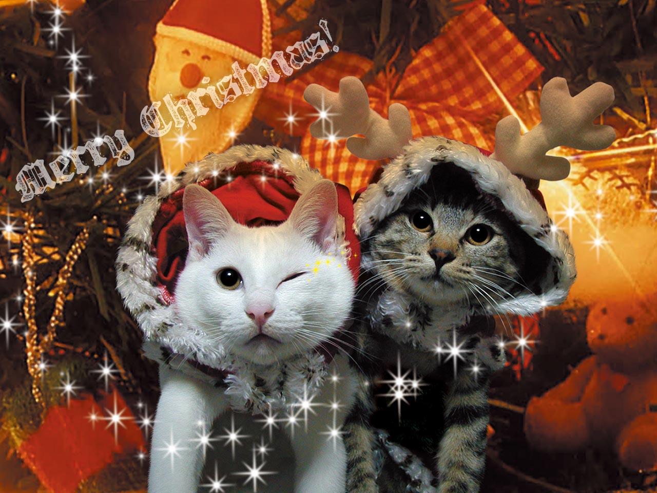 クリスマス壁紙 09 Lucky Dip666