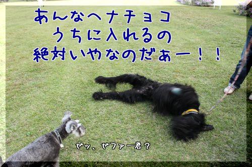 f0197317_21462441.jpg