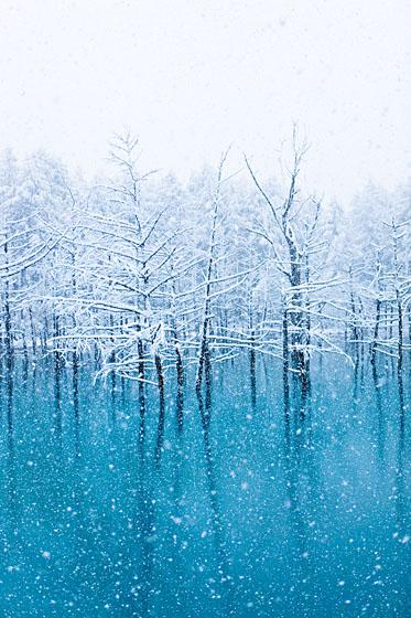 初雪、青い池_e0025030_1430097.jpg