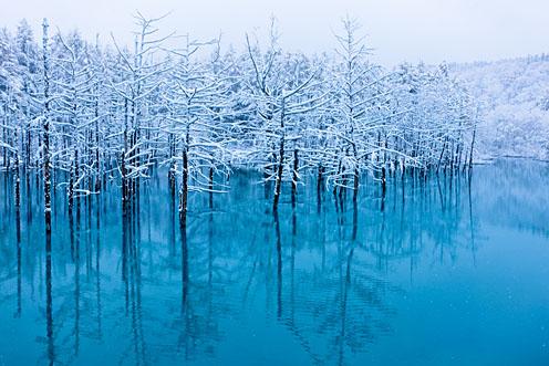 初雪、青い池_e0025030_1431470.jpg