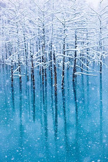 初雪、青い池_e0025030_14323147.jpg