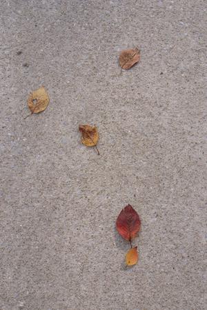 秋の句_a0097735_1419627.jpg