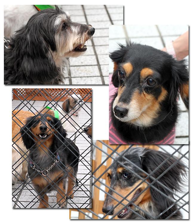 保護犬についてもう少しお話しさせて下さい_e0166336_11171920.jpg