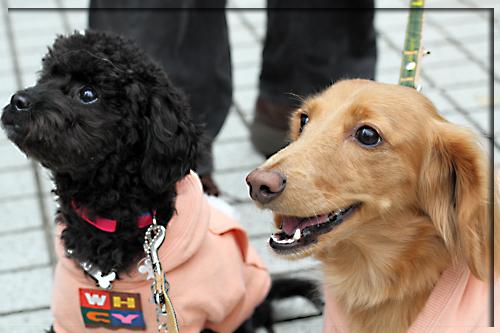 保護犬についてもう少しお話しさせて下さい_e0166336_11285012.jpg