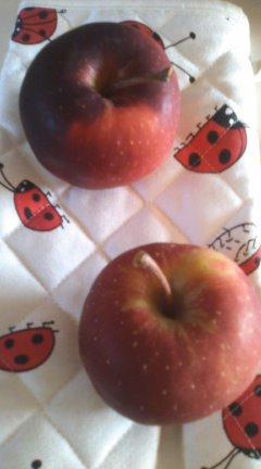リンゴ狩り_f0231042_11221619.jpg