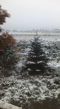 *初雪*_f0231042_11304799.jpg
