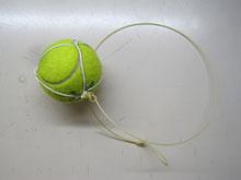 水曜テニスサークル、会員が増えました_a0151444_17261223.jpg