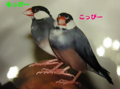 b0158061_21501050.jpg