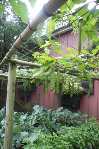 東京ディズニーシー植物散歩(ちょっとだけ①)_f0160063_9282542.jpg