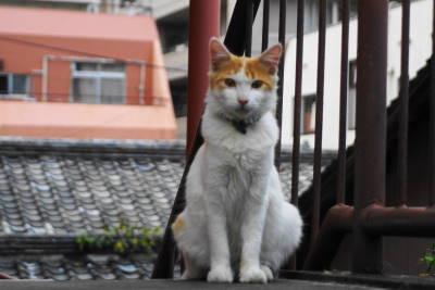 保育猫_c0193077_0261728.jpg