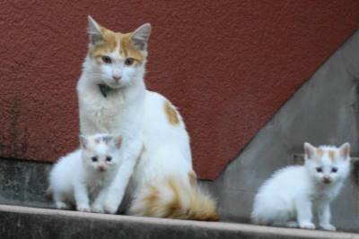 保育猫_c0193077_027036.jpg