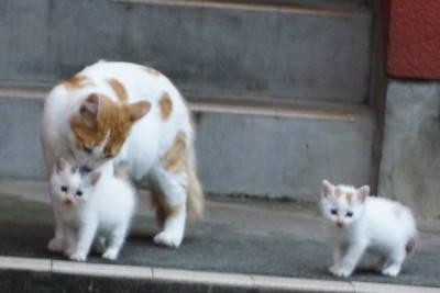 保育猫_c0193077_027385.jpg