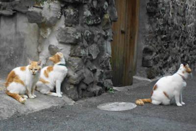 保育猫_c0193077_0291696.jpg