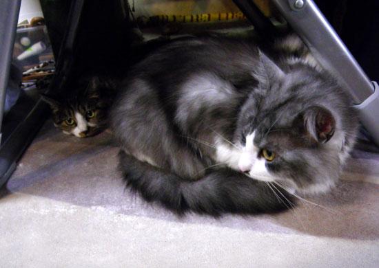 猫のコーナー復活&お知らせをちょこっと^^_a0136293_13584686.jpg