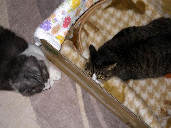 猫のコーナー復活&お知らせをちょこっと^^_a0136293_13594322.jpg
