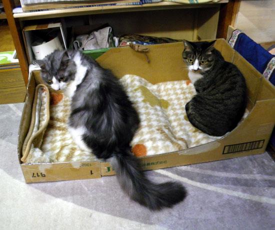 猫のコーナー復活&お知らせをちょこっと^^_a0136293_1402166.jpg