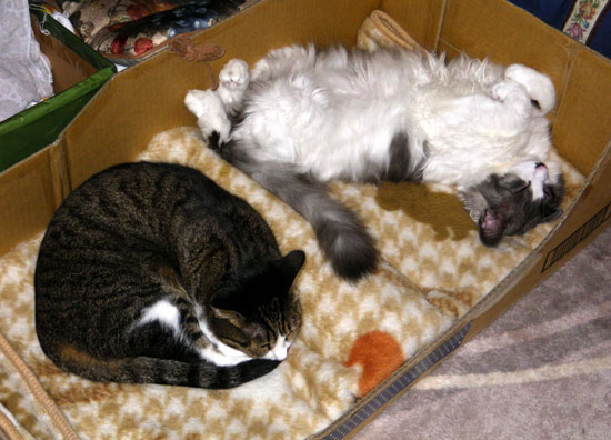 猫のコーナー復活&お知らせをちょこっと^^_a0136293_141636.jpg