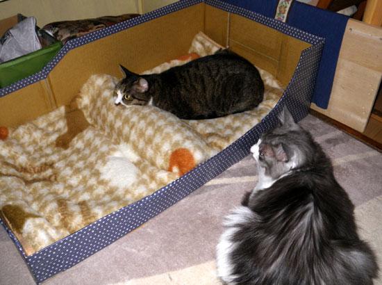 猫のコーナー復活&お知らせをちょこっと^^_a0136293_1435381.jpg