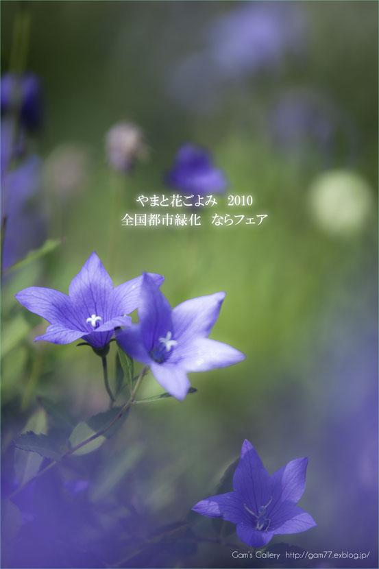 f0195893_8214821.jpg