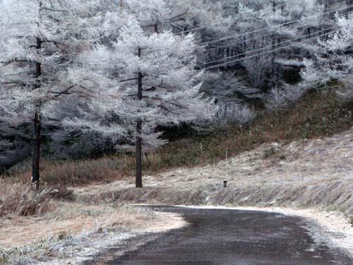 霧氷の朝_e0120896_7522294.jpg