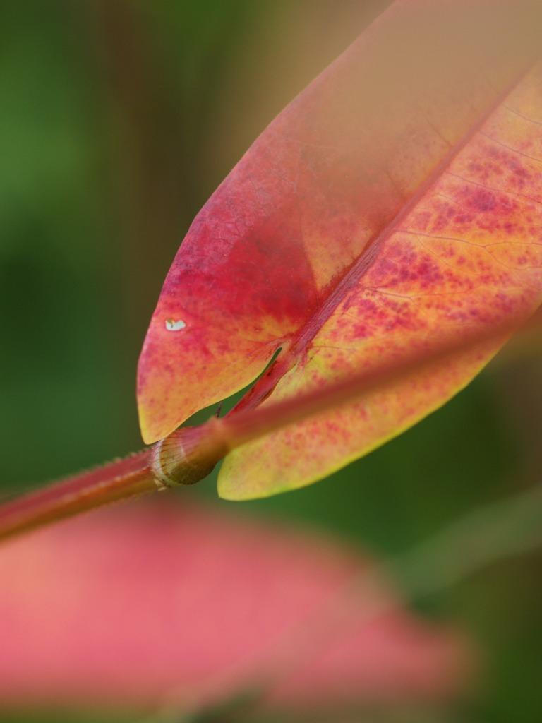 自然教育園で秋色を探してみた_f0224100_5344917.jpg