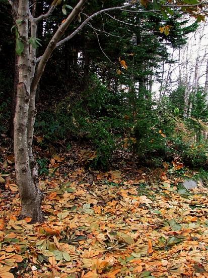 2010年10月28日(木):10月の観測史上最低気温だそうで_e0062415_17412375.jpg