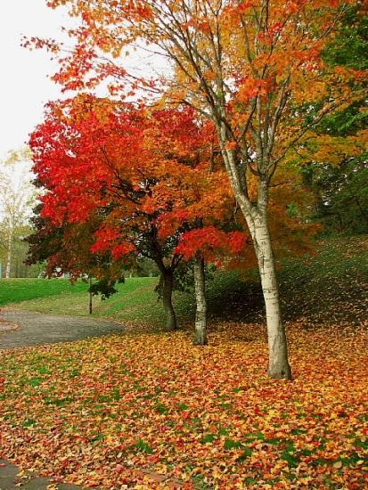 2010年10月28日(木):10月の観測史上最低気温だそうで_e0062415_17413545.jpg
