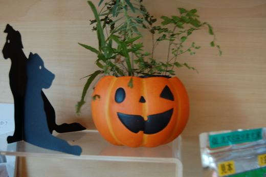 かぼちゃ祭_a0019819_15345131.jpg
