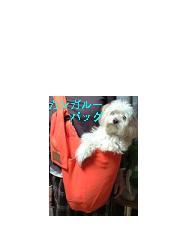 f0087347_20483681.jpg