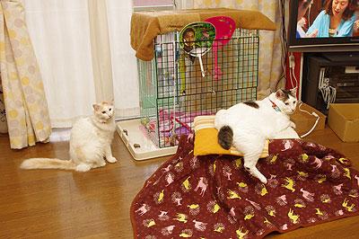 猫こたつ_a0028451_12463126.jpg