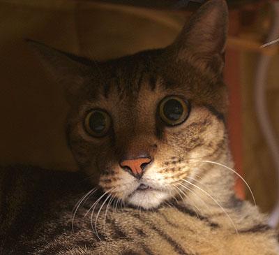 猫こたつ_a0028451_12481642.jpg