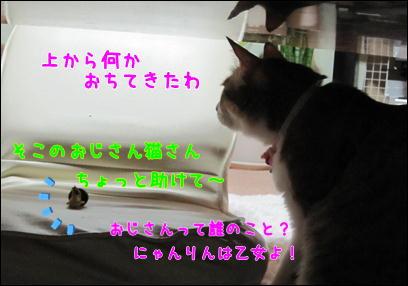 d0139352_0552126.jpg