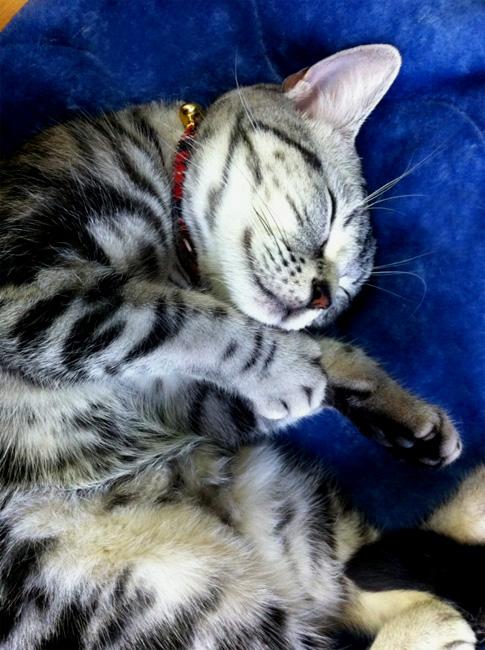 さんご♪寝てる♪_a0135756_174071.jpg