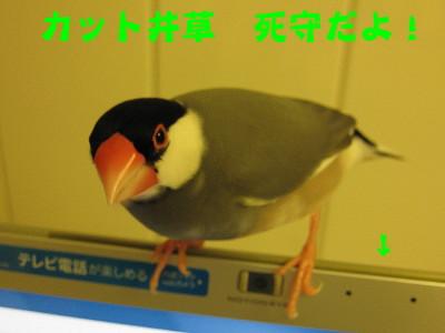 b0158061_214749.jpg