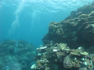 南の海へ行ってみた_c0207861_1704661.jpg