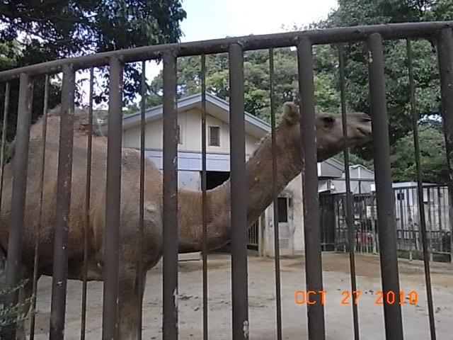 秋の動物園_e0155771_22471581.jpg