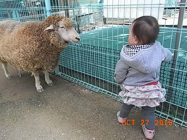 秋の動物園_e0155771_22492591.jpg