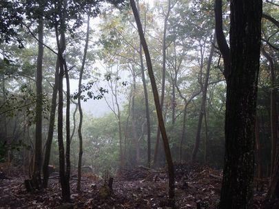 秋色いくつか ・・・_b0102572_14134320.jpg