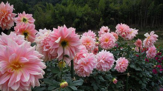 秋色いくつか ・・・_b0102572_14283727.jpg